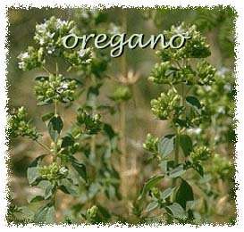 Greek oregano